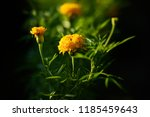 amazing nature concept of... | Shutterstock . vector #1185459643