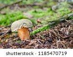 xerocomus subtomentosus  ... | Shutterstock . vector #1185470719