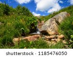 amazing nature environment of... | Shutterstock . vector #1185476050