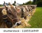 K He An Der Viehschau In...