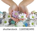 holding daisies and healing... | Shutterstock . vector #1185582490