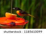 Beautiful oriole bird on a bird ...