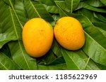 tropical mango fruit on green...   Shutterstock . vector #1185622969