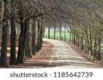 a dirt or gravel road through a ... | Shutterstock . vector #1185642739