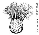 fennel. vector black and white... | Shutterstock .eps vector #1185692869