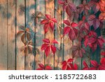Beautiful Autumn Red Leaves Of...