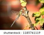 blue green mosaic maiden sits... | Shutterstock . vector #1185761119