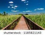Boardwalk Over Wetlands In...