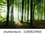 morning in the forest | Shutterstock . vector #1185823960