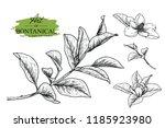 sketch floral botany set.... | Shutterstock .eps vector #1185923980
