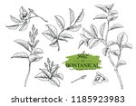 sketch floral botany set.... | Shutterstock .eps vector #1185923983