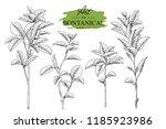 sketch floral botany set.... | Shutterstock .eps vector #1185923986