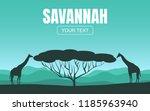 giraffes eat leaves from a tree ... | Shutterstock .eps vector #1185963940