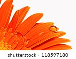 Orange Gerbera With Water Drop...