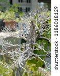 dead bonsai tree | Shutterstock . vector #1186018129