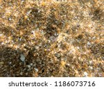 seabed  underwater photography | Shutterstock . vector #1186073716