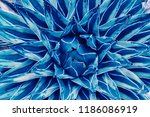 agave cactus  abstract natural... | Shutterstock . vector #1186086919