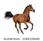 young bay purebred stallion... | Shutterstock . vector #1186120660
