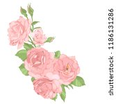 roses. perfect for background... | Shutterstock .eps vector #1186131286