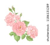 roses. perfect for background... | Shutterstock .eps vector #1186131289