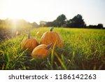 three ripe pumpkins on a... | Shutterstock . vector #1186142263