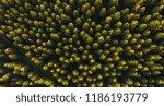aerial top view of summer green ... | Shutterstock . vector #1186193779