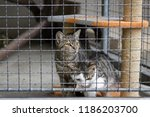 two abandoned cats in animal... | Shutterstock . vector #1186203700