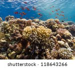a thriving coral reef in the... | Shutterstock . vector #118643266