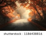 amazing autumn forest with...   Shutterstock . vector #1186438816