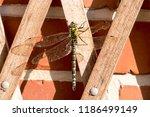 blue green mosaic maiden sits... | Shutterstock . vector #1186499149