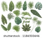 set tropical leaf isolated.... | Shutterstock .eps vector #1186503646