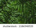 green leatherleaf fern... | Shutterstock . vector #1186548520