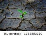 green plant growing trough dead ...   Shutterstock . vector #1186553110