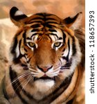 portrait painting of tiger face ... | Shutterstock . vector #118657393
