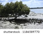 a tree and ducks at the bay... | Shutterstock . vector #1186589770