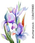 Iris Flowers  Watercolor...