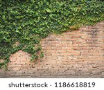 green ivy grows on old... | Shutterstock . vector #1186618819