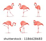 red and pink flamingo set...   Shutterstock .eps vector #1186628683
