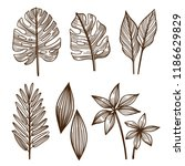 collection of hand drawn... | Shutterstock .eps vector #1186629829