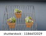 succulent in pot on shelves | Shutterstock . vector #1186652029