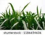 lush foliage of plants against... | Shutterstock . vector #1186654636