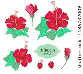 bundle of hand drawn hibiscus... | Shutterstock .eps vector #1186732009