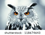 Stock photo piercing owl eyes 118674643
