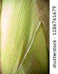 peel of corn texture | Shutterstock . vector #1186761679