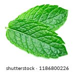 mint leaves isolated on white | Shutterstock . vector #1186800226