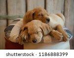 two cute puppies sleeping  ... | Shutterstock . vector #1186888399