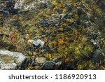 varicolored detailed texture of ... | Shutterstock . vector #1186920913