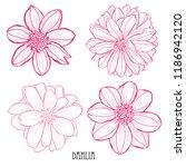Decorative Dahlia  Flowers Set...