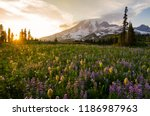 Wildflowers At Sunset   Mount...
