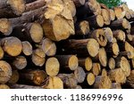 Stack Tree Trunks End Of A...